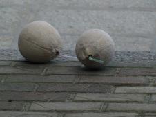 xiamen-gulangyu island-coconuts-2012