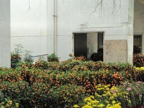sz-new-year-tangerines-2013