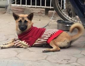 hn-ba dinh dog
